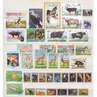 Фауна. 38 гашеных марок разных стран.