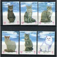 Иран - 2004 - Кошки - [Mi. 2980-2985] - полная серия - 6 марок. MNH.