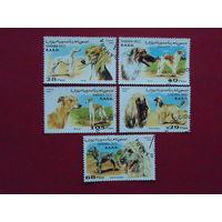 Сахара 1996г. Собаки.