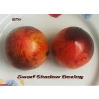 Семена томата Dwarf Shadow Boxing (Карлик Бой с тенью)
