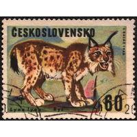 Кошки. Чехословакия 1966. Рысь. Марка из серии. Гаш.