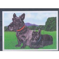[1209] Сент-Винсент и Гренадины 1998. Фауна.Собаки. БЛОК.