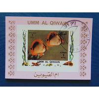 Эмм-аль-Кайвайн. Морская фауна.